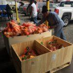 Providing Healthy Foods