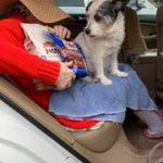 Feeding Companion Pets